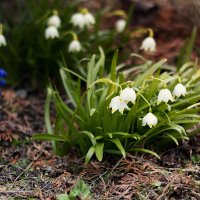 Первые мгновения весны! :: Pavel