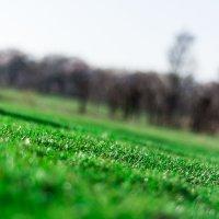 green grass :: Глеб Зуев
