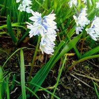 Наступление весны) :: Ангелина