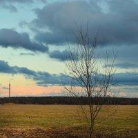 Одинокое дерево :: Ксения Рудова