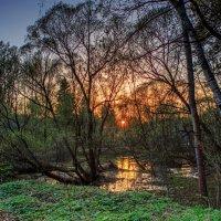 Весна на болоте :: Светлана Матонкина
