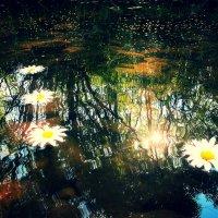 Солнца блики на воде.. :: Алёнка Дербина