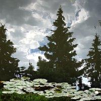 Три ели, у пруда сели ... :: Лариса Корженевская