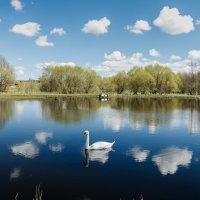 Лебедь в облаках :: Александр Корольков