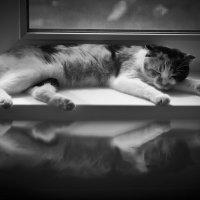 Кошкин сон :: Юлия Куваева
