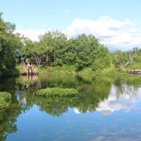 лесное озеро :: Александр Белов