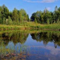 Дачный пруд :: Татьяна Соловьева