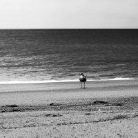 Одиночество в большом мире :: Надежда Абрамян