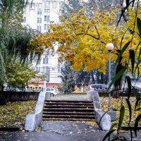 Осень в моем городе. :: Копыткина Юлия
