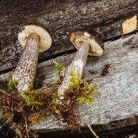 Свежие грибочки,только что из леса))) :: Ольга Нежикова