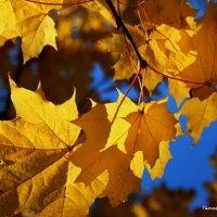 Золотились листья клёна :: Татьянка *