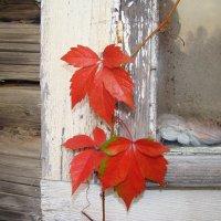 Осень в деревне :: Татьяна Сапрыкина