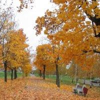 Последнее золото листвы. :: Александр Куканов (Лотошинский)