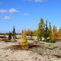 Осенний пейзаж Ямала :: Артём Глушко
