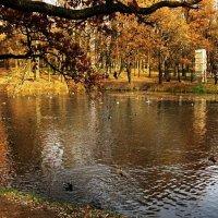 Осень :: Дарья Котова