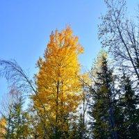 Не долгий век, листвы янтарной :: Владимир Куликов