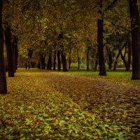 Осенняя! :: Андрей Троицкий