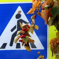 Когда осень шагала по городу :: Ирина Румянцева