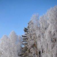 Зимняя аллея. :: Наталья Золотых-Сибирская