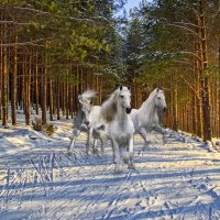 Эх три белых коня... :: Татьяна Н.