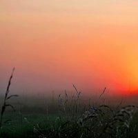 Цвет нового дня :: Ростислав