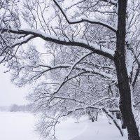 Все белым, бело ... :: Лариса Корженевская
