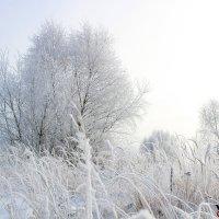 Зимняя красота природы. :: Виктория Невская