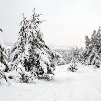 Сказочный лес :: Сергей М