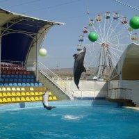 Дельфинарий «Коктебель» :: Наиля
