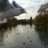 Внезапная чайка :: Надя Попова