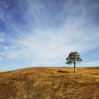 Вся прелесть одиночества :: Ирина Лежнева