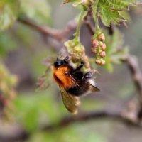 Трудовые будни пчелы :: Любовь