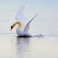 Волшебная Царевна Лебедь :: Ольга (crim41evp)