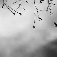 A bird :: Alexlok22