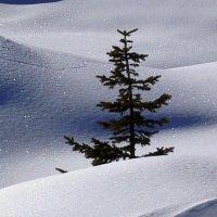 Затерянная в снегах :: Galina Solovova