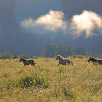 утренние лошади :: Евгений Тарасов