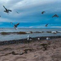 birds in the sky :: AirStream