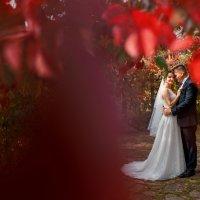 Свадьба в винограднике :: Александр Грозовский
