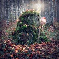 Волшебный пень :: Ольга Томилова