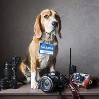 Пёс фотографа :: Тата Казакова
