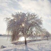 Зимнее солнце :: Liliya Kharlamova