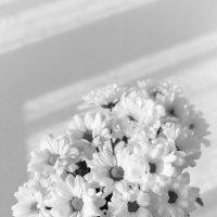 Букет хризантем в чёрно-белом цвете :: Ksenija Mudryaninets