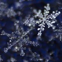 снежинки :: Андрей Иванов