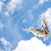 голубь мира :: александр макаренко
