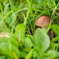 первые грибы :: Андрей Иванов