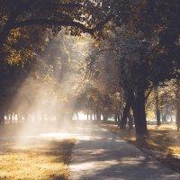 Осенняя алейка :: Ирина Федорова