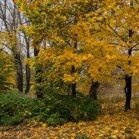 Осень в парке :: Сергей Бочаров