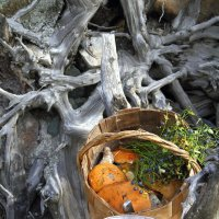 Осень в корзине. :: Weskym Markova