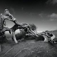 Битва драконов :: Александр Константинов
