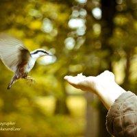 Ручные птички Петергофа :: Ольга Журавлева
